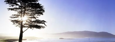 Sun-soaked view of a tree by the coast at Pebble Beach golf course